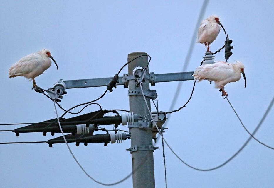View トキ放鳥から10年 サブP