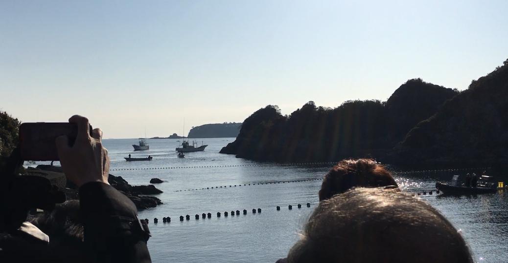 Taiji dolphin drive