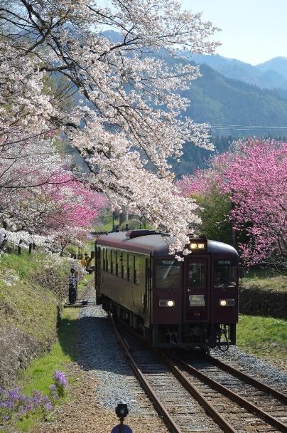 Cherry and Peach Blossom at Gunma Prefecture