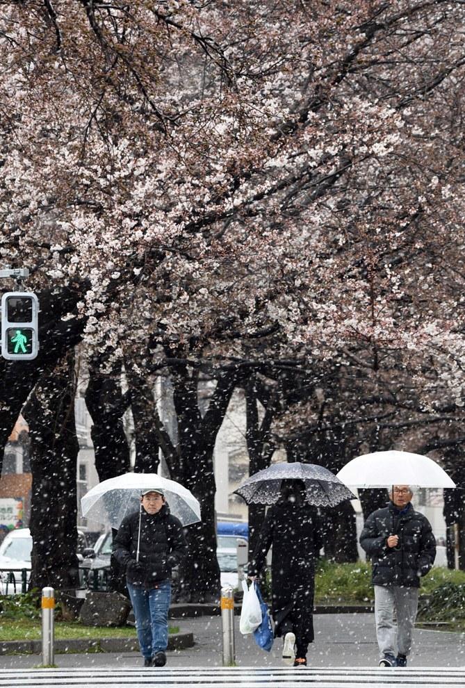 【12版1面】都内で降雪