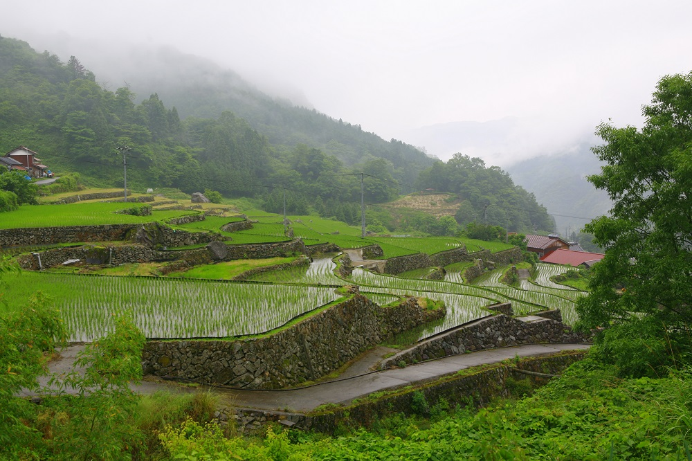 Tiered rice fields known as tanada
