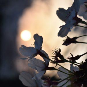 花見 - Paj Palma