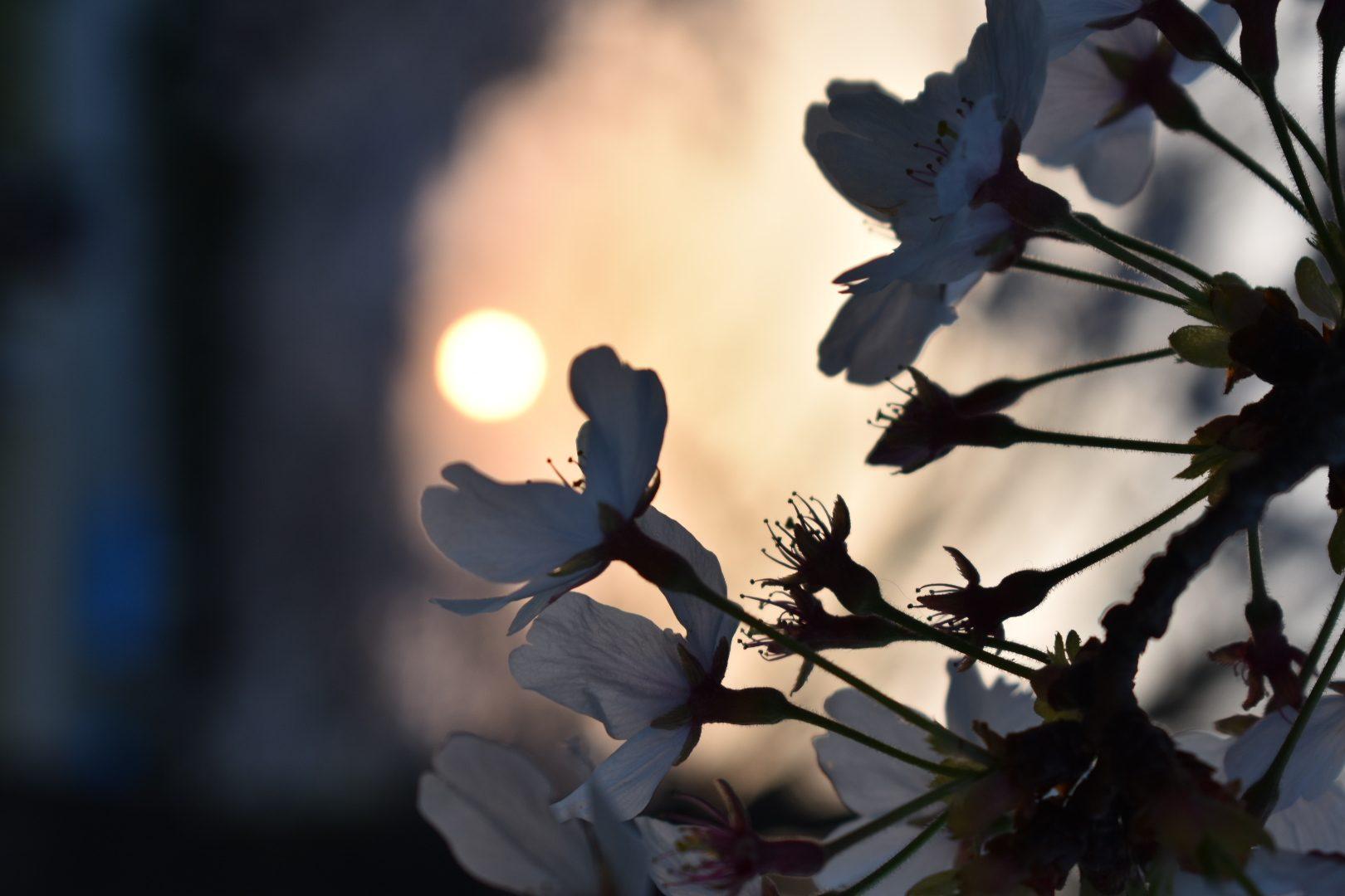 花見 – Paj Palma