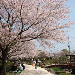 Sakura - Omura Nagasaki - Ruth Requiero