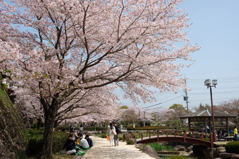 Sakura – Omura Nagasaki – Ruth Requiero
