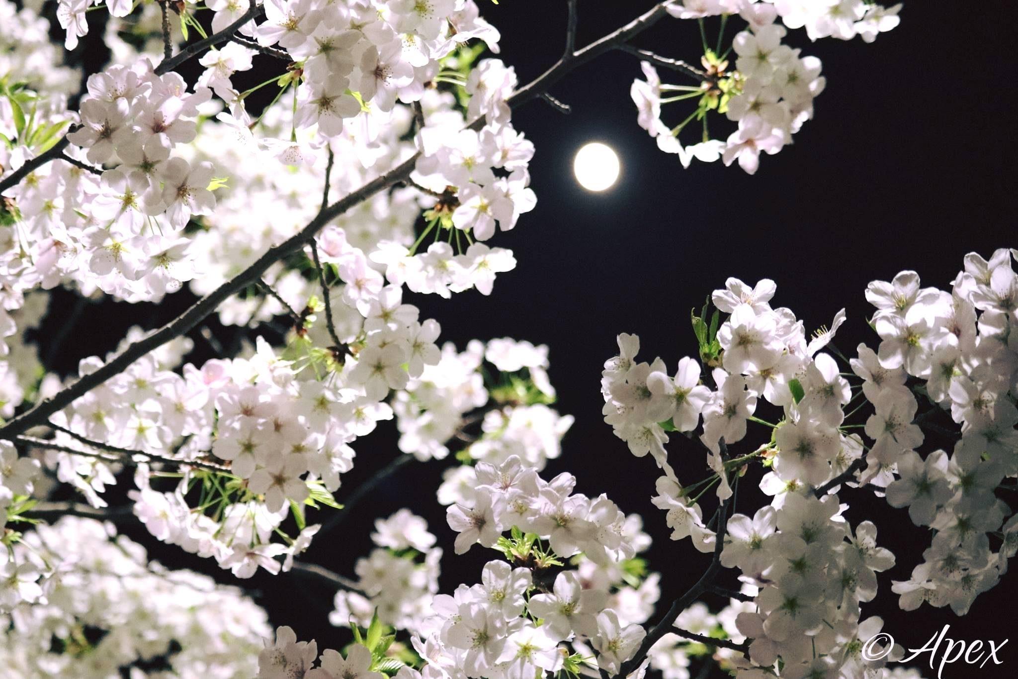 Illuminated celebration of love – Apeksha