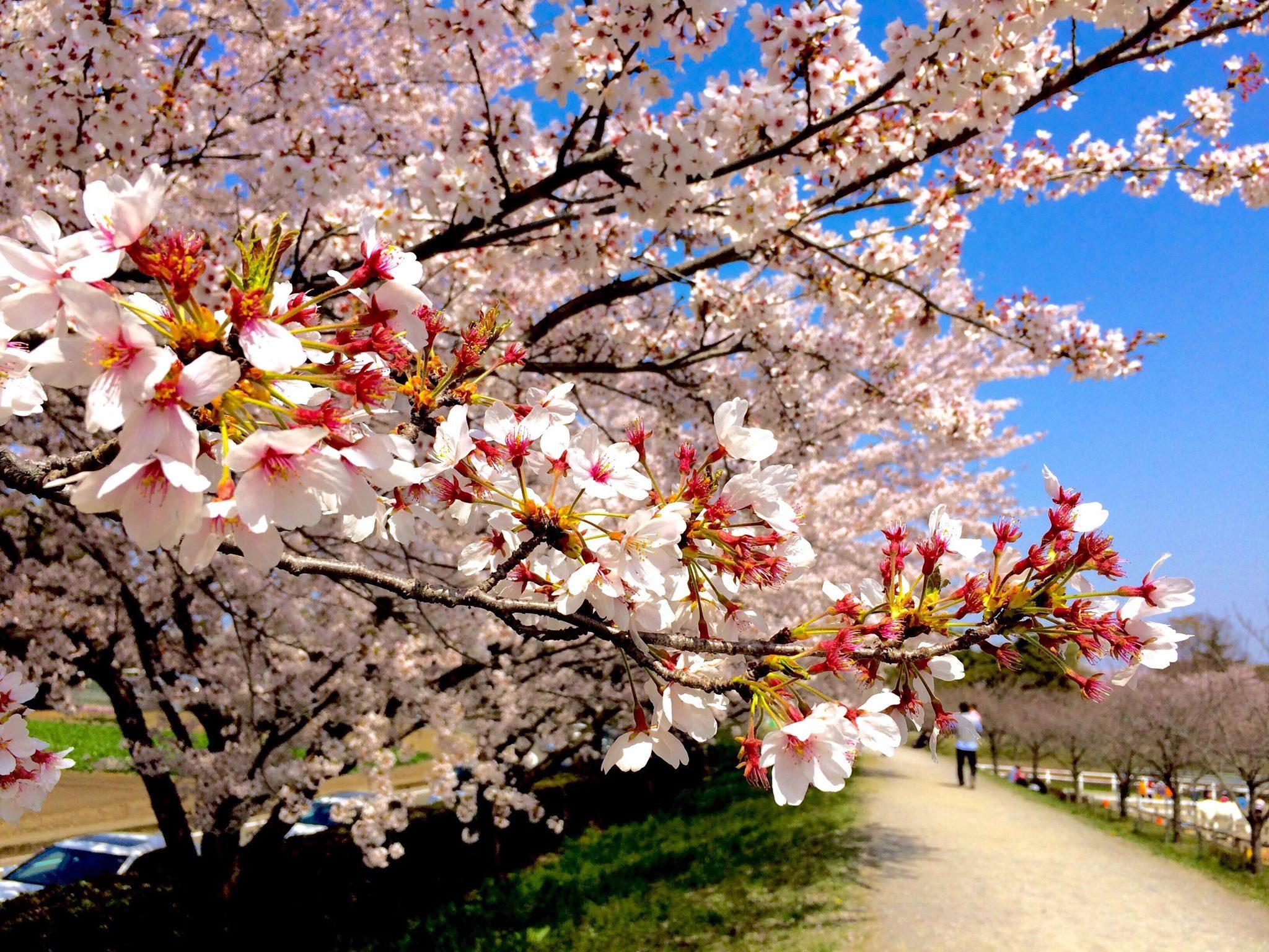 Sakura The New Beginnings – Raymond Erece