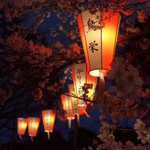 Sakura with Lanterns - Sayali Akshantal