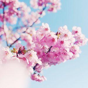 In Full Bloom - Mai Estarez