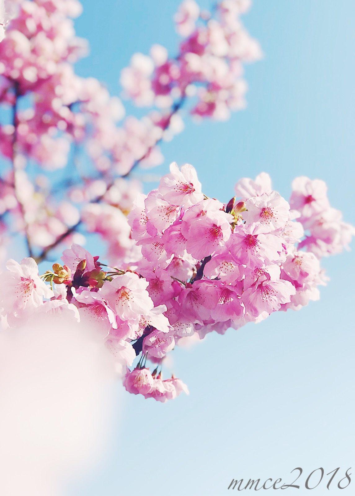 In Full Bloom – Mai Estarez