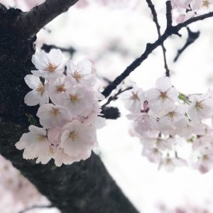 It is spring again, a reminder of how beautiful change can truly be - Christina Cayabyab