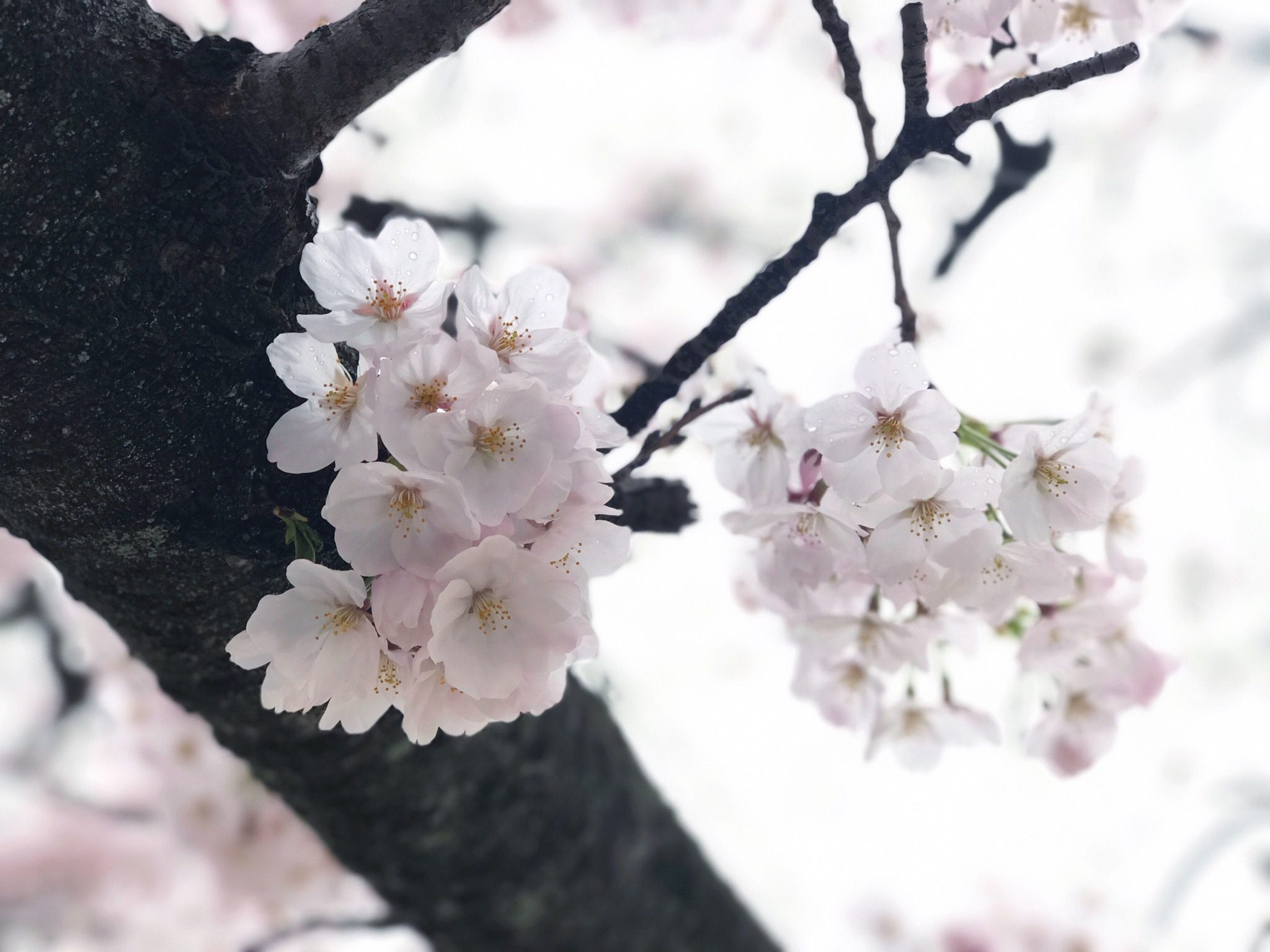 It is spring again, a reminder of how beautiful change can truly be – Christina Cayabyab