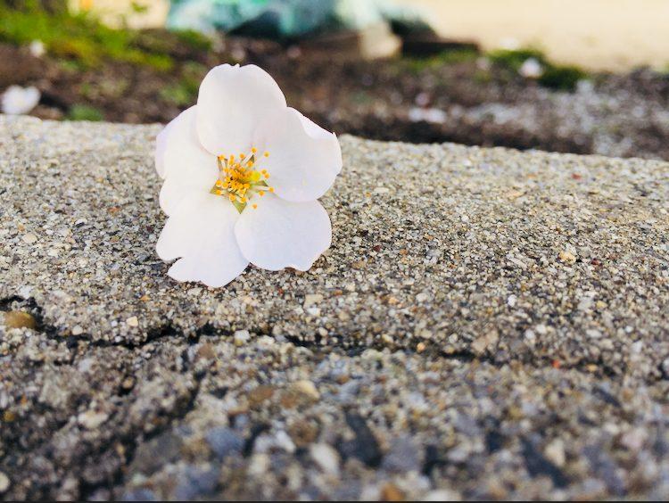 My first Spring – Mary Ann Elopre (Mean)