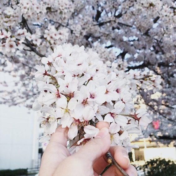 Sakura in my hands – Aika Shimizu