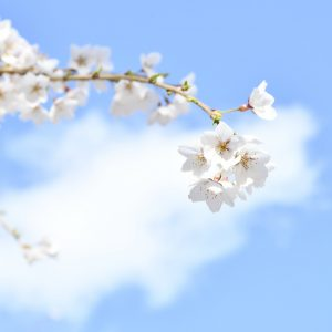 青い空: Sakura in the Sky - Huyo Ma. Theresa