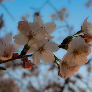 "Spring Break - Maverick Gonzales ""Mav"""