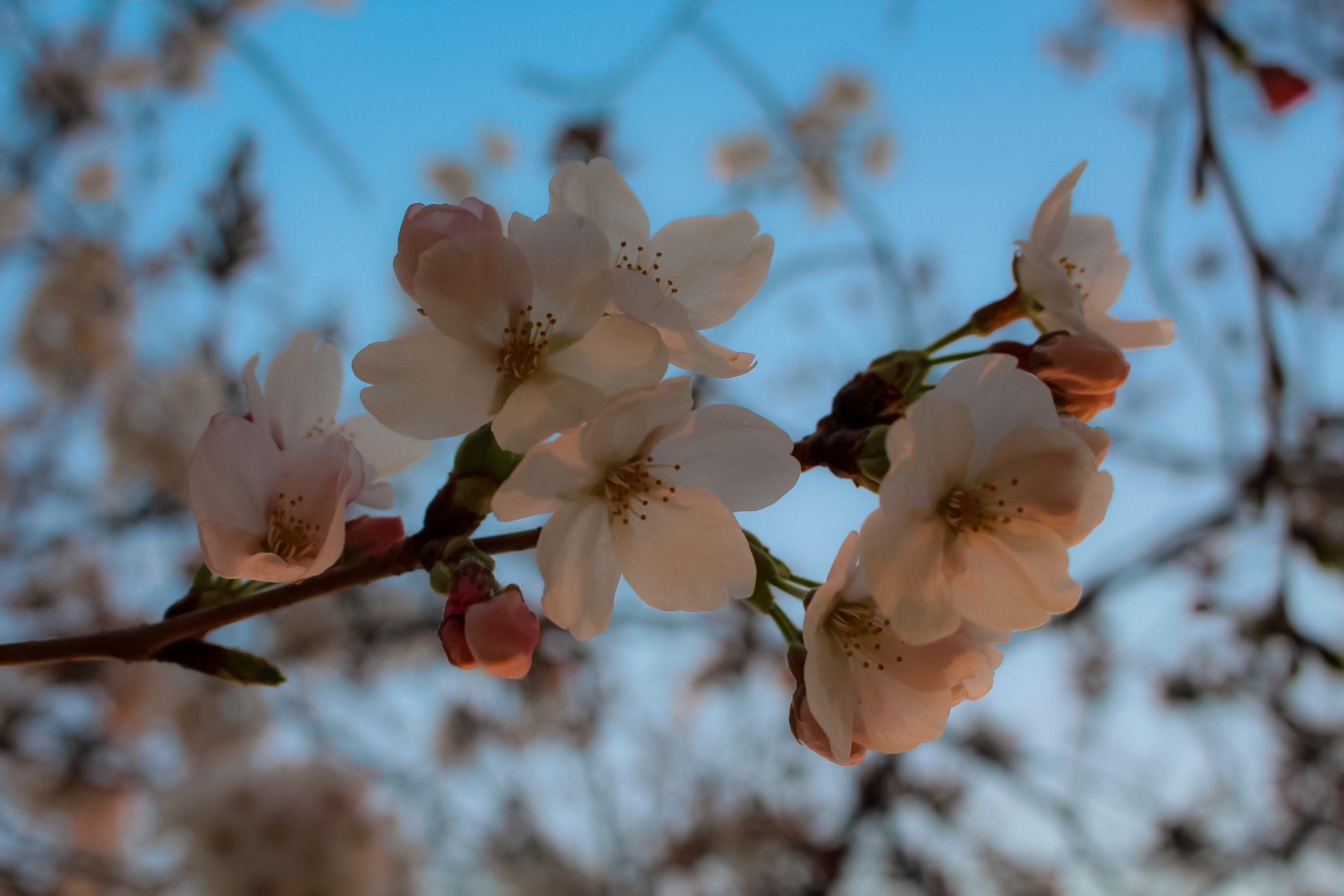 "Spring Break – Maverick Gonzales ""Mav"""
