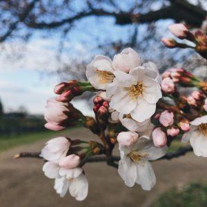 Spring Time - Ith Suhaimi