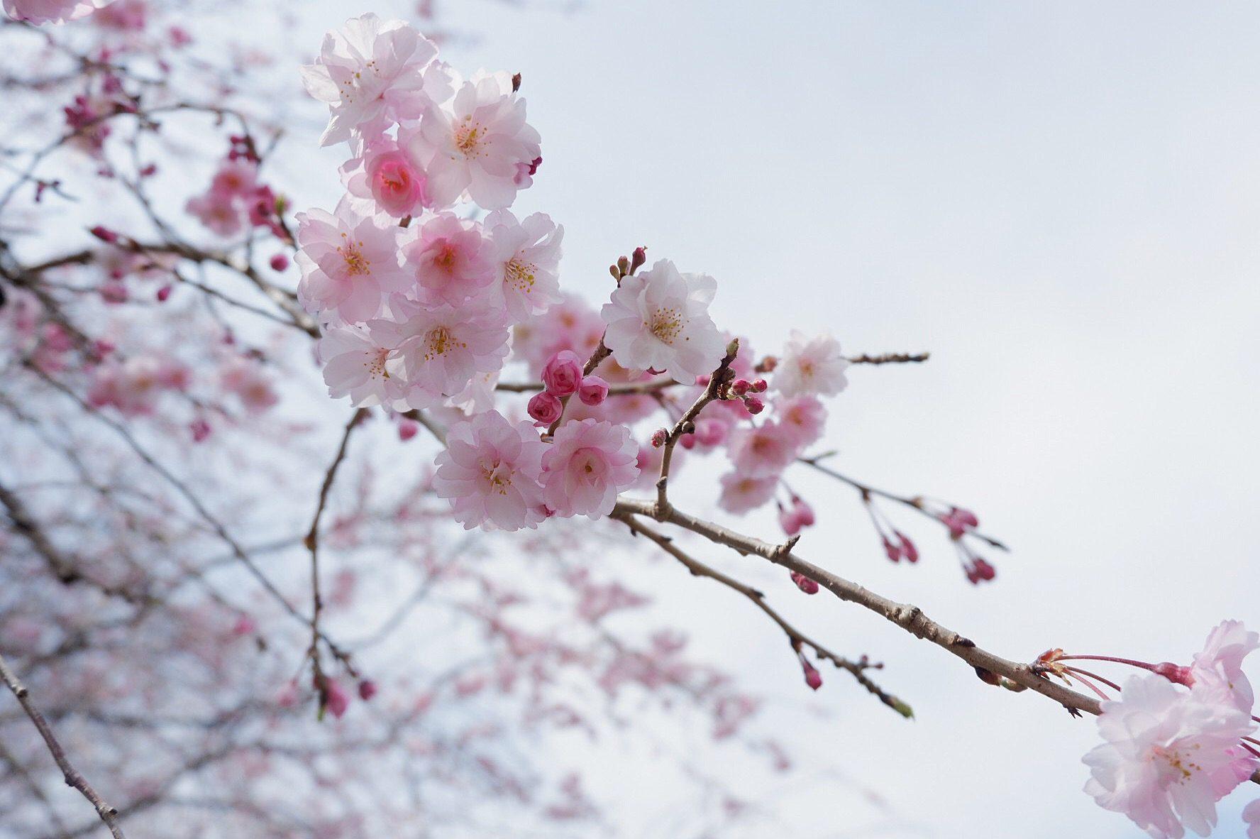 The Stunning Beauty – RuztinaGold