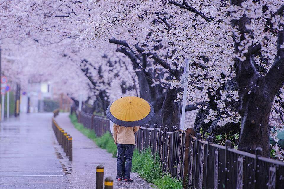 sakura time – sonny wardhana