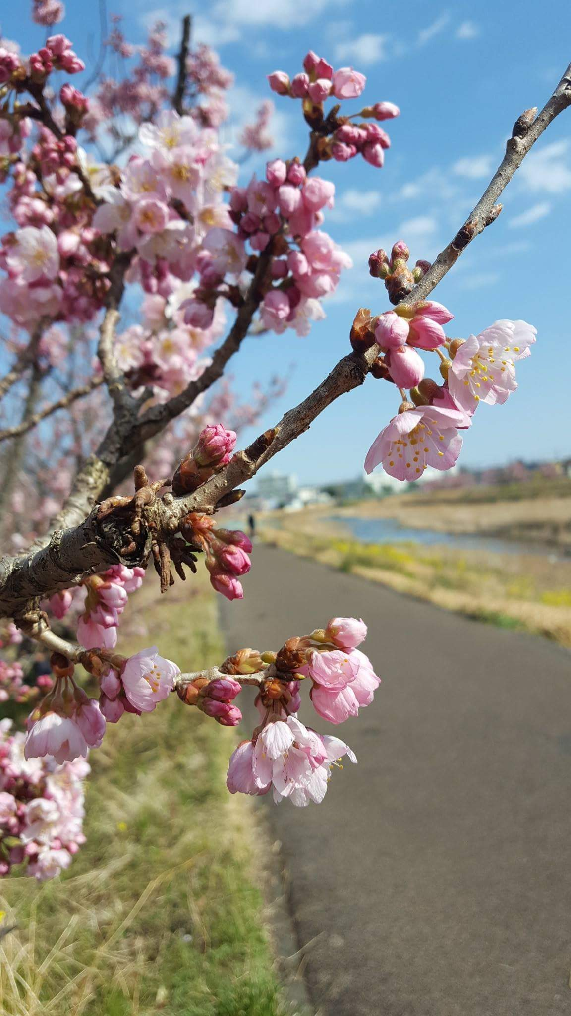 Riverside blossoms – Anday judith