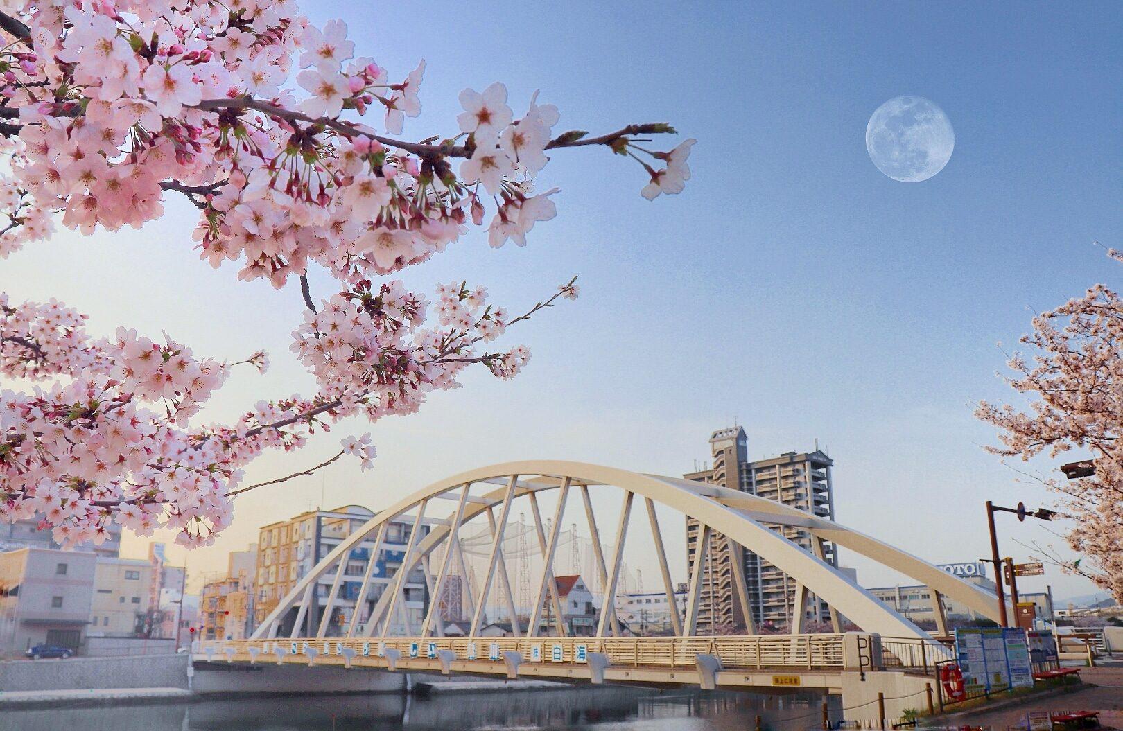 Japan spring is ❤ – Alfie Gado