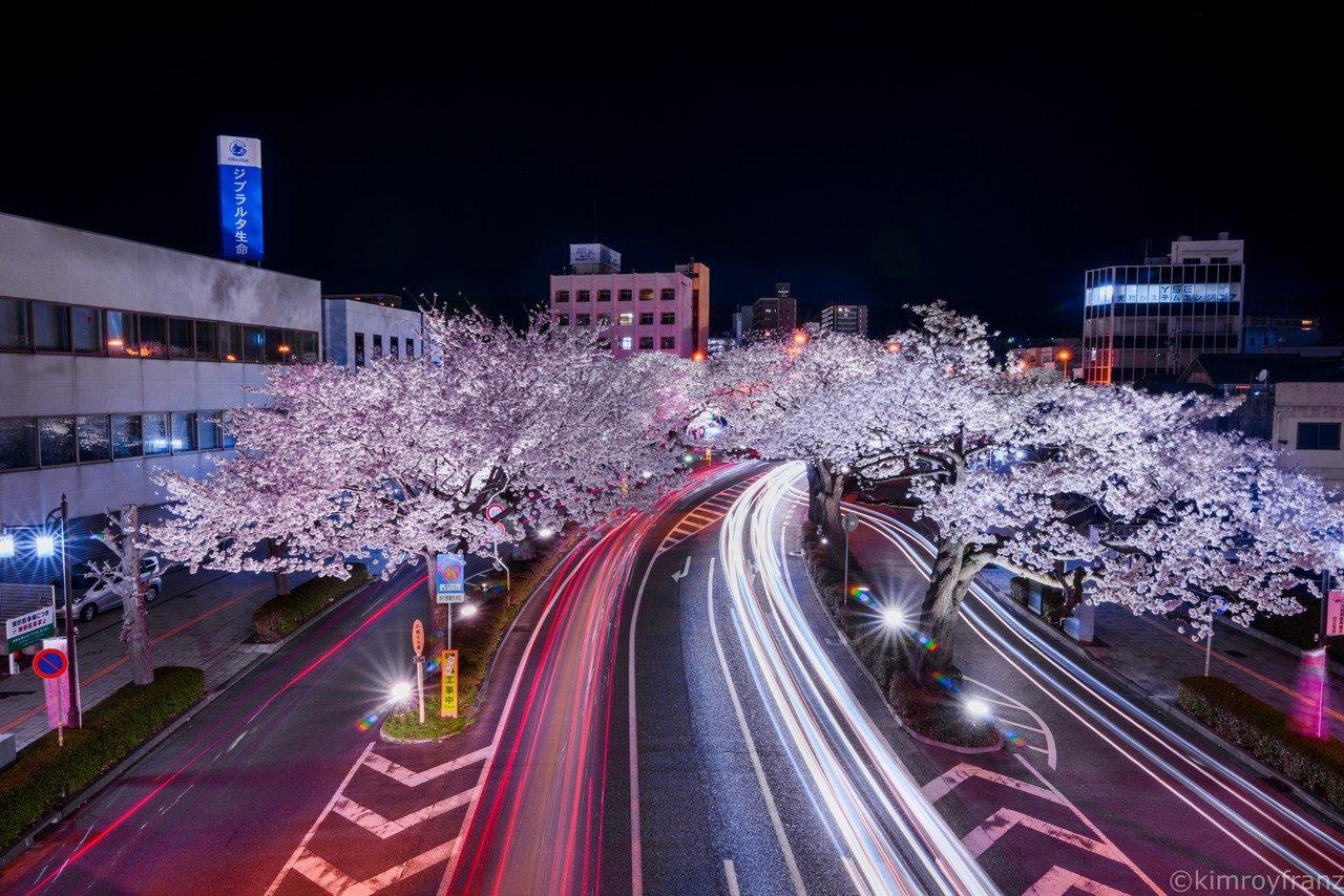 The beauty of Sakura at Night – Kimroy B. Francisco