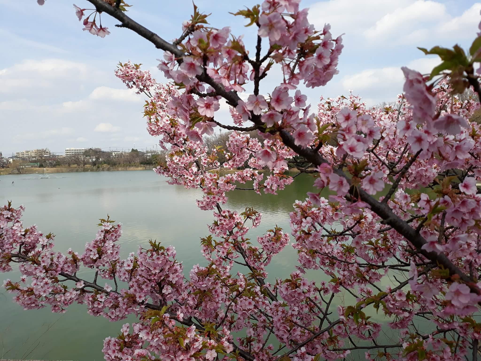 Pretty in Pink – Mylz Bunda
