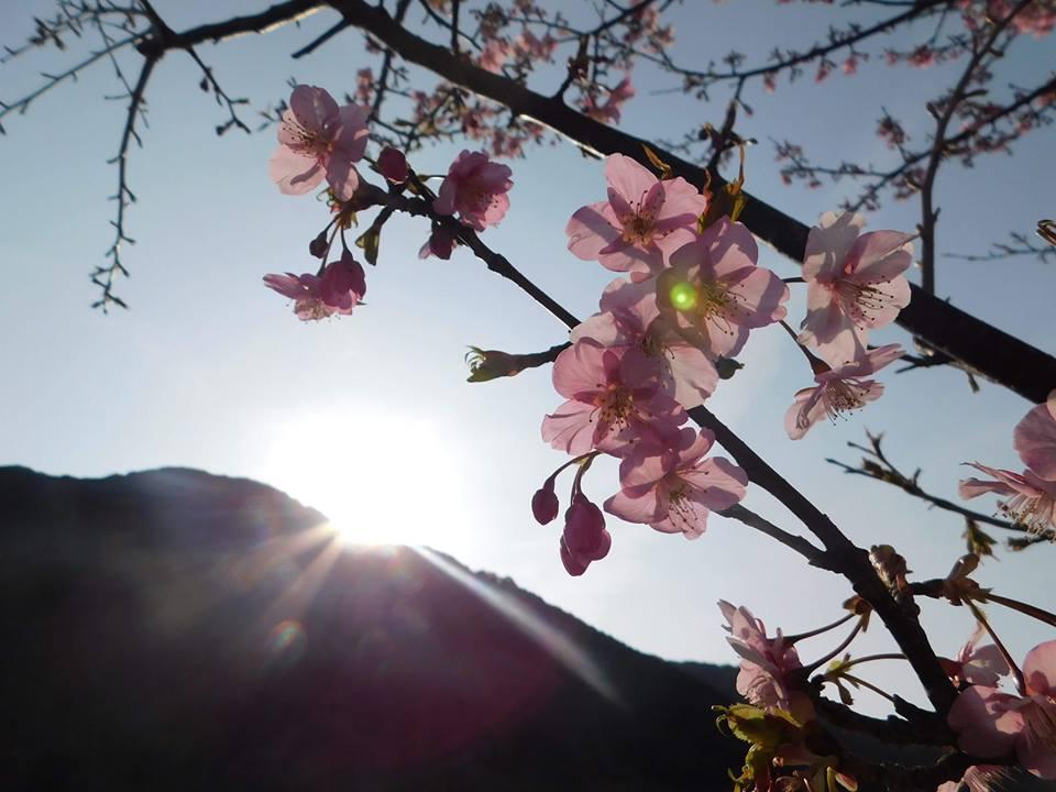 Blooming Beauty of Spring – LUCAS ISHIDA