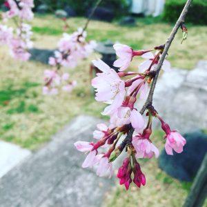 aileen adrinao - Sakura