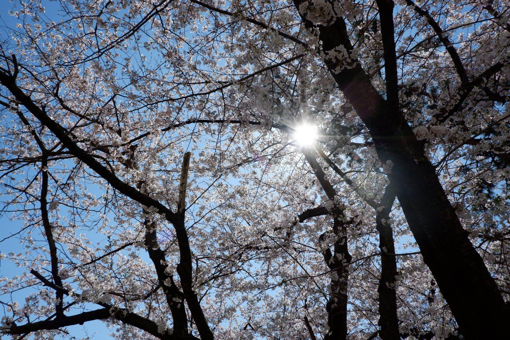 Rukiya – Shine