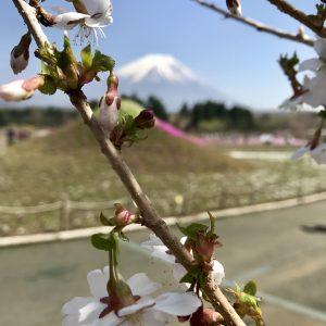 Jha - Sakura