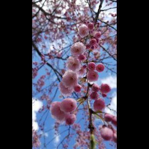 Kyla Ocampo - Blush in Spring