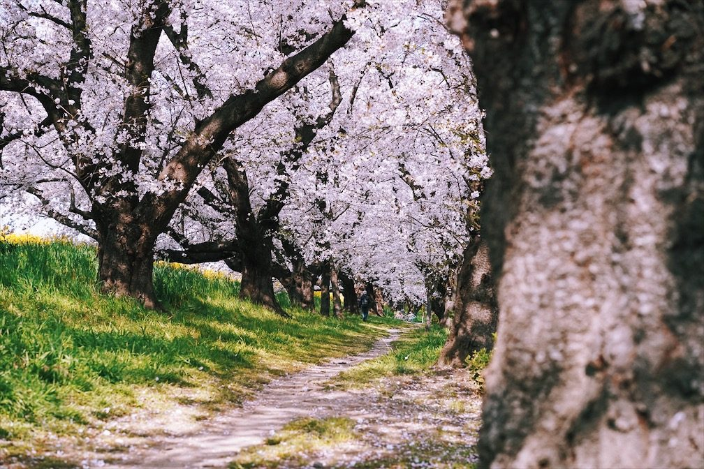 Kentotster – Fairytale Road