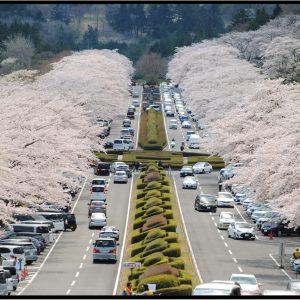 TICO - Fuji Cemetery Park