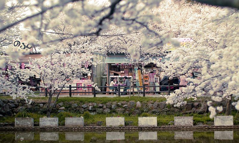 indra – Sakura Matsuri is always romantically sweet