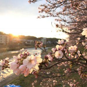 Laksmy - Sunset sakura