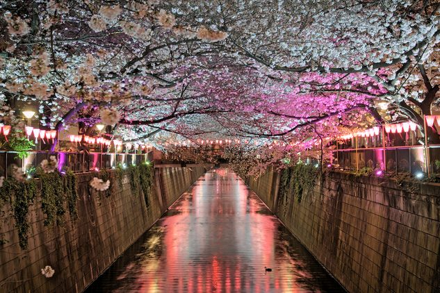 AwOiSoAk - Sakura Night