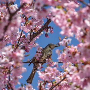Jun Moredo - Spring has come