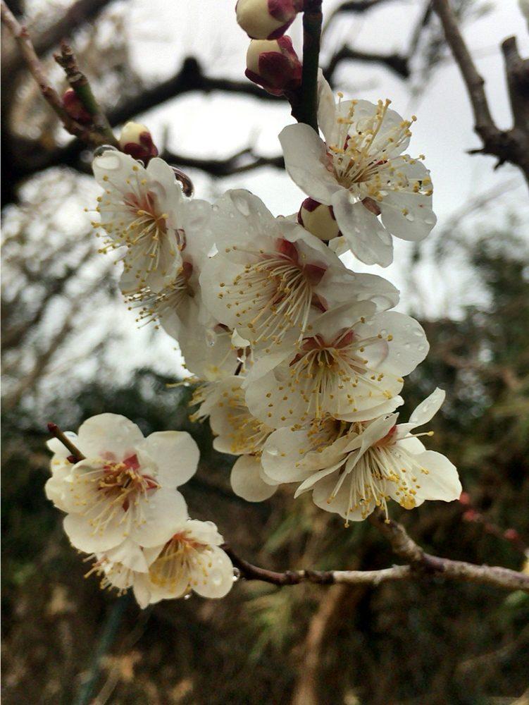Caryl jen yokosu – Sakura2018