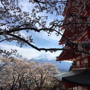 Taylor Matthews - Sakura and Fuji