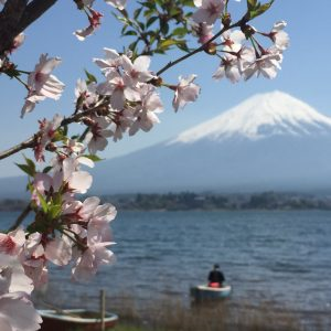 tan beng fang - sakura with mount fuji