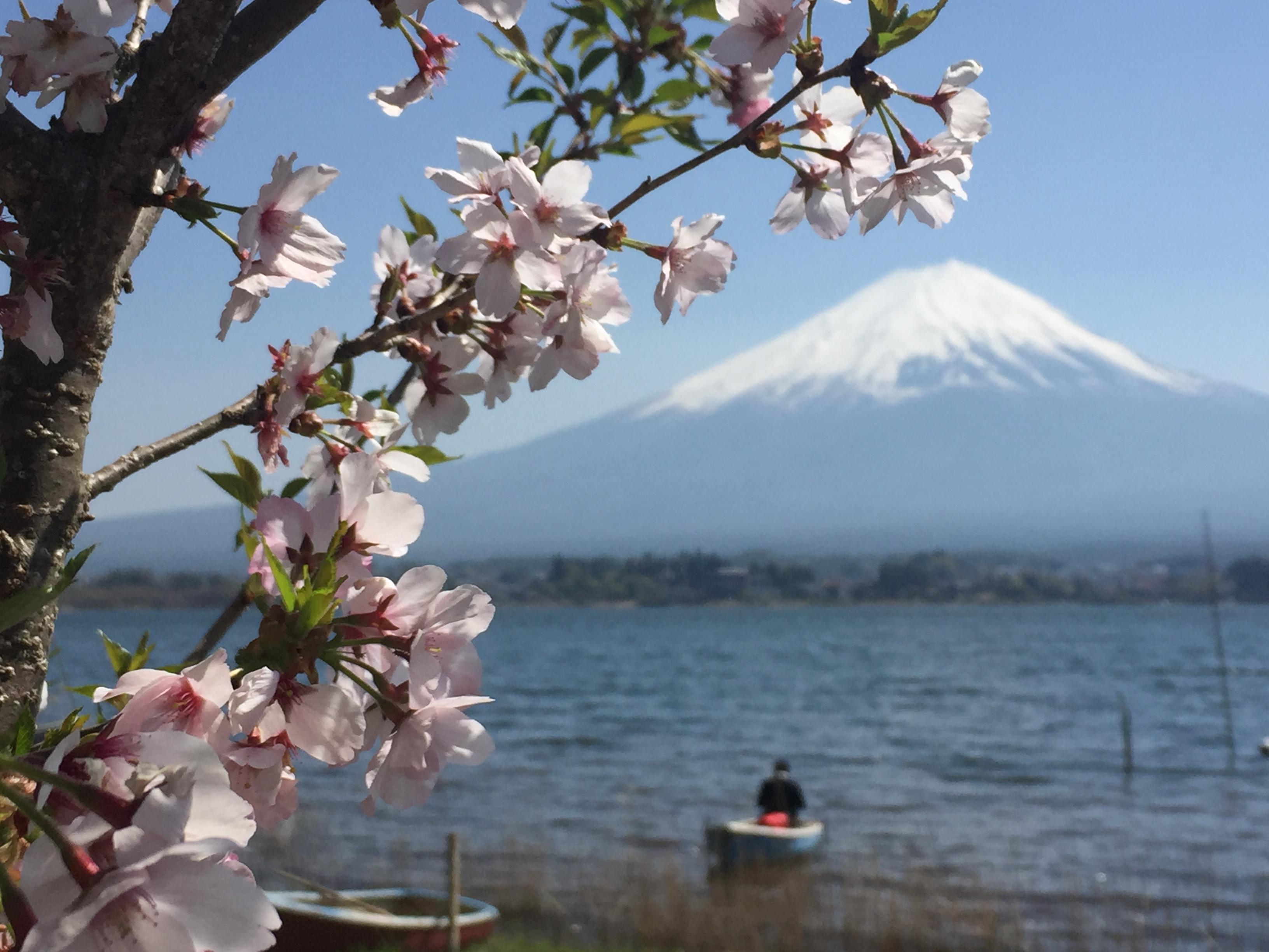 tan beng fang – sakura with mount fuji