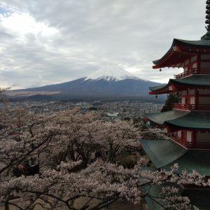 Arlon Buerano - Sakura and Fujisan