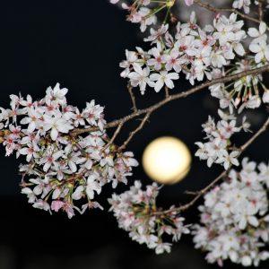 Koji Ridwan - into the moon light