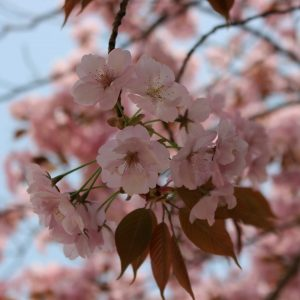 Evelyn B. Valenzona - japan\'s finest