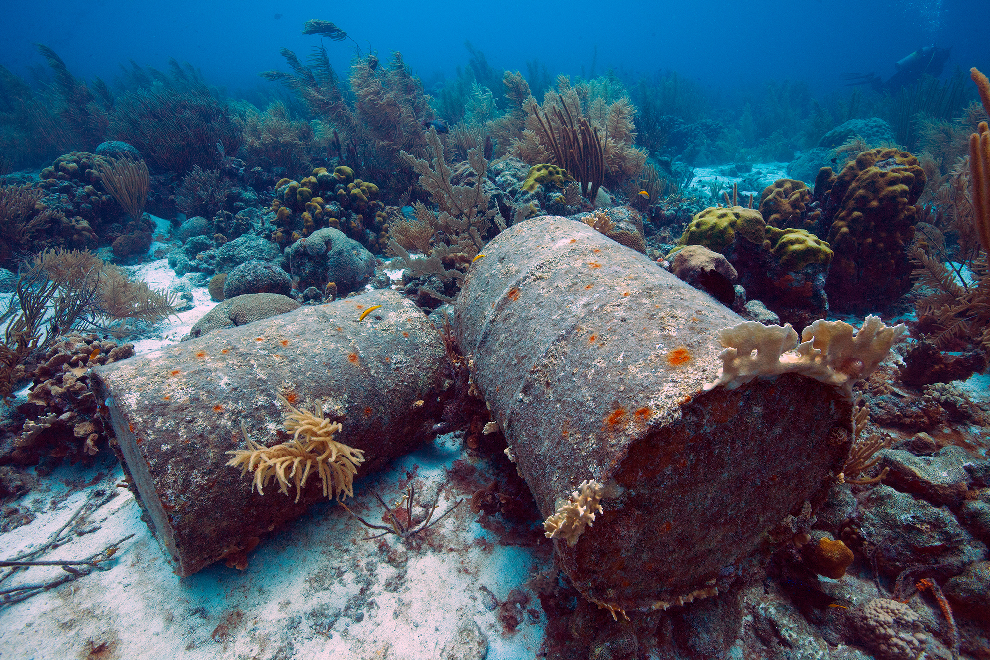 Paradise (Almost) Lost: Nearly 99% of Okinawa's Coral Reef is Unhealthy