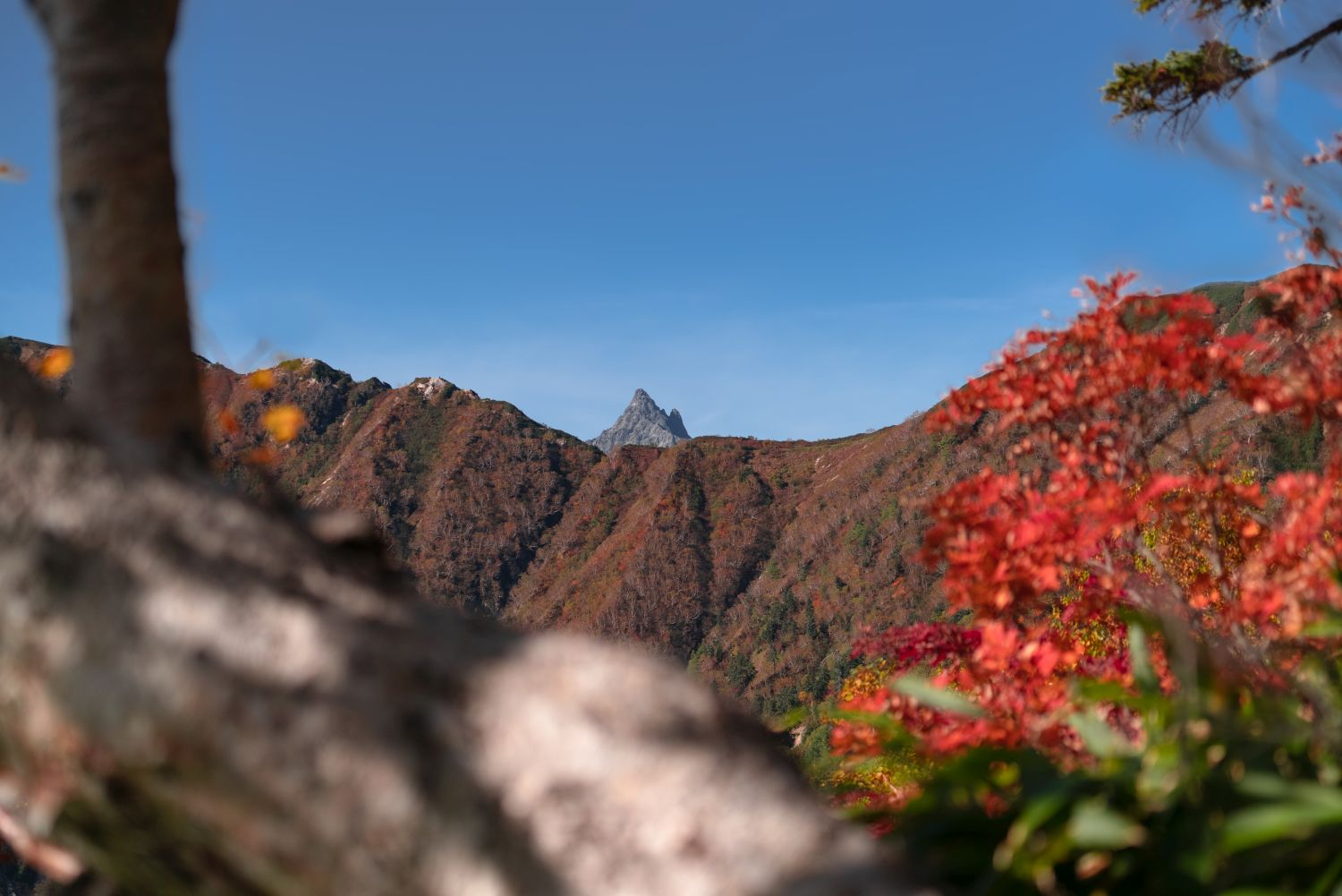 [Wonder Mountains] The Most Enchanting Aspect of Japan's Autumn