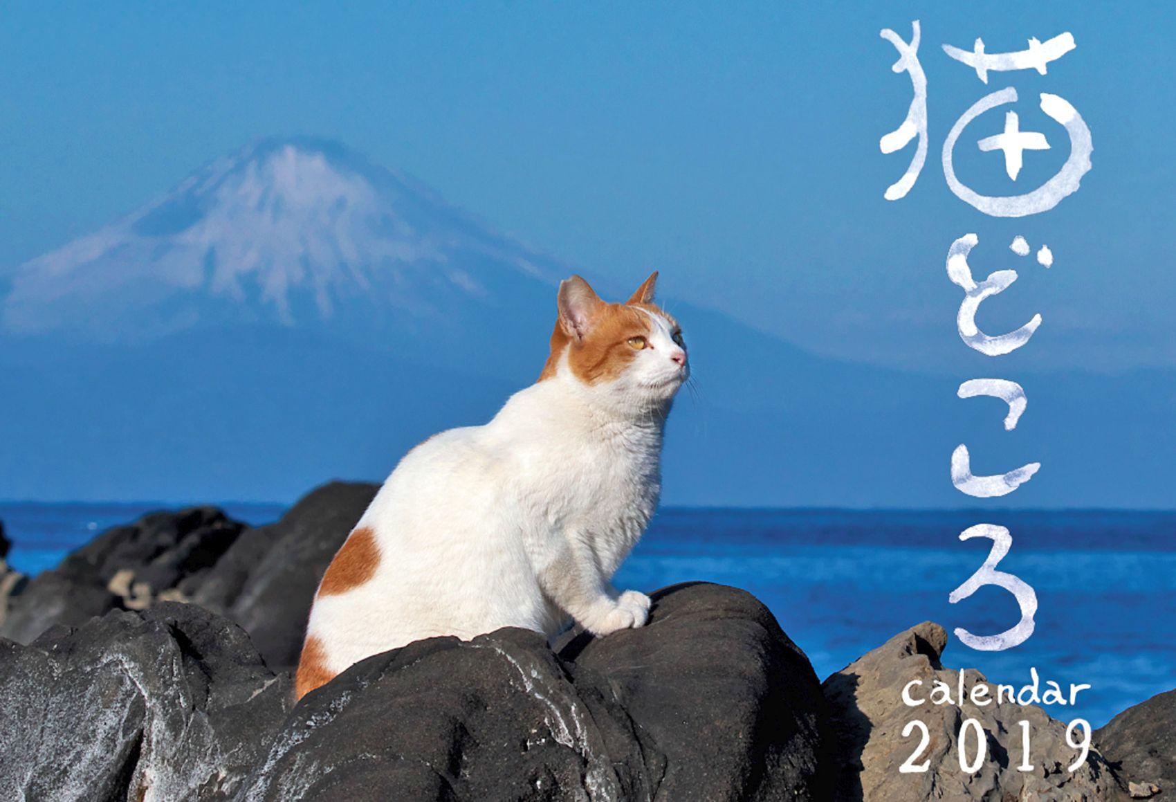 'Neko Dokoro': Photographer Shuji Ozaki Releases Cat Calendar for 2019