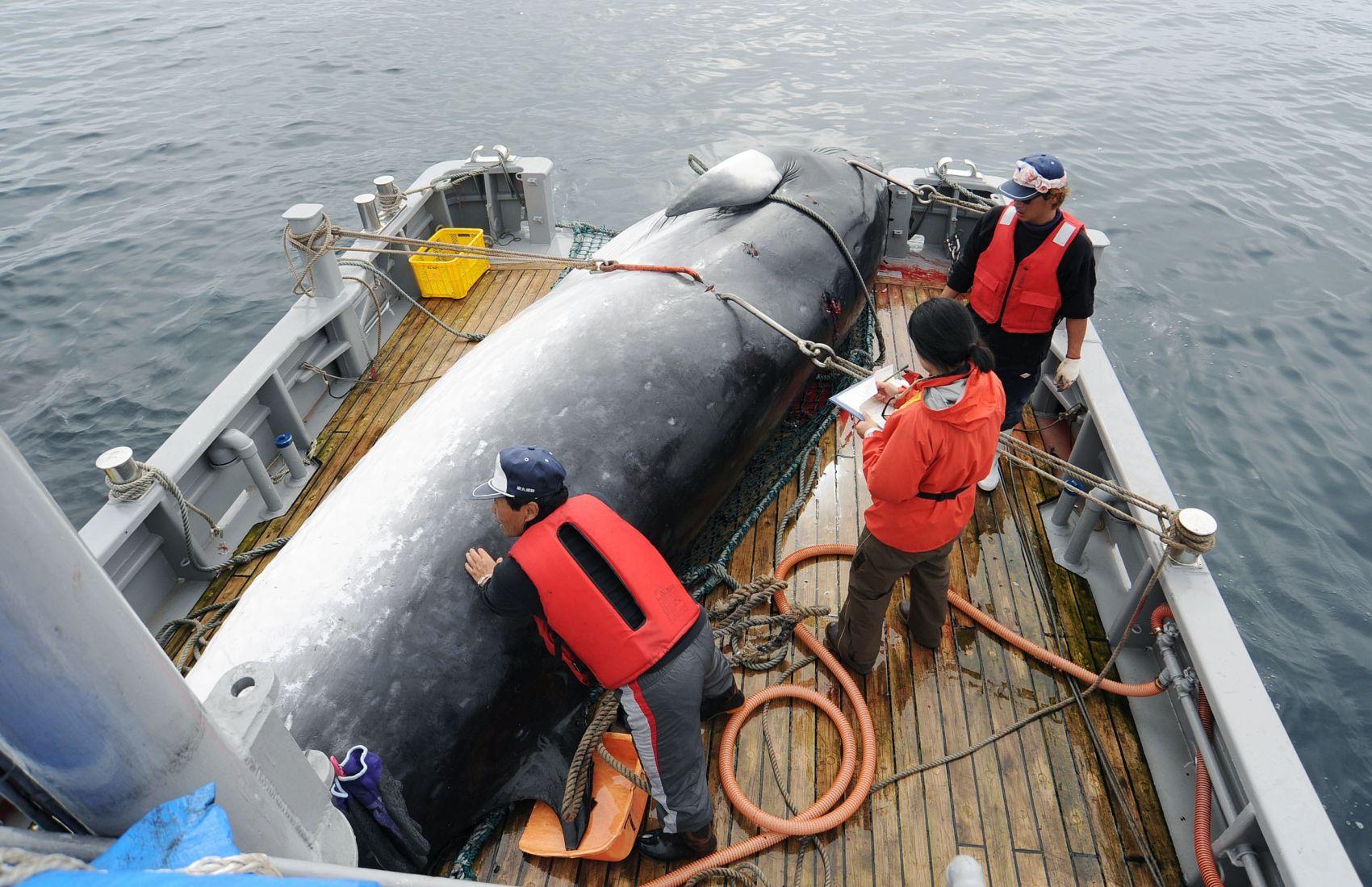 Japan Whaling 002